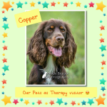 Our Pets as Therapy dog Copper